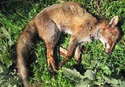 Víctimas de la caza