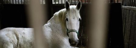 recogida de firmas para pedir la prohibición de la importación a Europa de cualquier bien producido usando técnicas que causen sufrimiento a los animales.