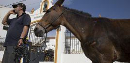 El Rocío 2019: 24 horas velando por el bienestar animal