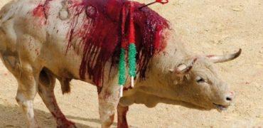 El Alcalde de Valladolid ha ratificado la eliminación de la subvención municipal a las corridas de toros.