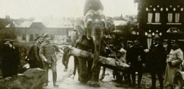 En París quieren erigir un monumento en honor a los animales caídos en la Primera Guerra Mundial