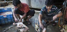 Clamor mundial contra la venta de animales vivos en mercados de Asia