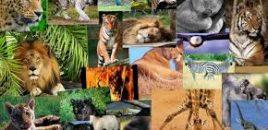 El gobierno continúa trabajando para reforzar el tráfico de especies silvestres