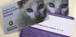 El Ayuntamiento de Valladolid instaura el carné de alimentador de gatos