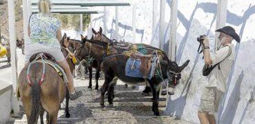 Turistas obesos están hiriendo a los burros que los llevan a recorrer la isla griega de Santorini.