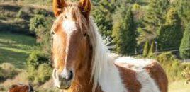 Publicada la nueva guía sobre cómo tener un caballo
