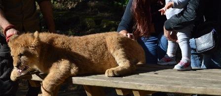 A vistas de que el Zoo de Castellar sigue con su actividad Fotomaratón , InfoZoos se ve obligado a tomar medidas