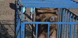 Adiós a una tradición ancestral: la rifa del cerdo de San Antón en Almagro (Ciudad Real)