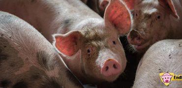 69 organizaciones  europeas de protección animal urgen a la Unión Europea a prohibir el uso en mataderos del CO2 como método de aturdimiento para el año 2025