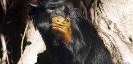 Rescatan en Alicante un primate originario de las selvas de Bolivia