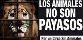 Salamanca da la bienvenida al circo sin animales.  InfoCircos celebra que por primera vez en años las fiestas de Salamanca contarán con un circo que no utiliza animales