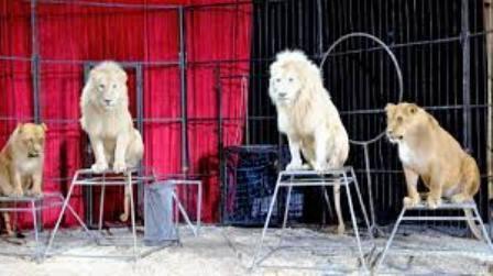 ¡Nueva Jersey será el primer estado de los Estados Unidos en prohibir los circos con animales salvajes!