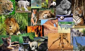 ANDA pide que se materialice la transferencia de la competencia CITES al Ministerio de Transición Ecológica