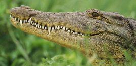 Destapada en Alicante una red de criaderos ilegales con 138 animales de especies en peligro