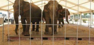 elefantes maltrato animal