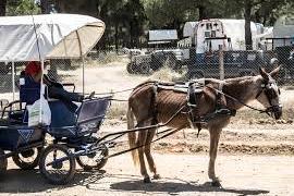 Sentencia sin precedentes por el maltrato a unas mulas de alquiler durante la romería de El Rocío