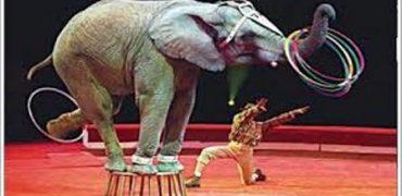 Más de 180.000 ciudadanos piden a la Comisión Europea la prohibición de los circos con animales salvajes