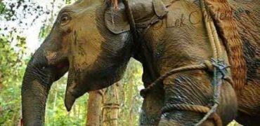 La utilización de animales salvajes en los circos ha dejado de considerarse aceptable por la inmensa mayoría de la población