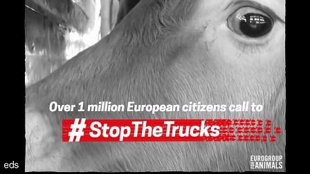 Más de 1 millón de ciudadanos europeos piden poner un fin a los transportes de animales a largas distancias
