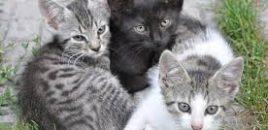 Arroyomolinos (MADRID) instala un proyecto pionero de casetas para las colonias de gatos