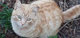 ANDA, La Asociación Nacional para la Defensa de los animales felicita al Ayuntamiento de Marugán por la gestión responsable de su población felina