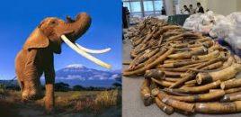 ANDA pide a las autoridades CITES españolas que se cierre el mercado interno de objetos de marfil