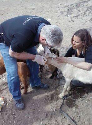 mejorar la calidad de vida de los animales durante su paso por estos mercados