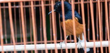 Una de cada cinco especies es perseguida y vendida viva o por trozos