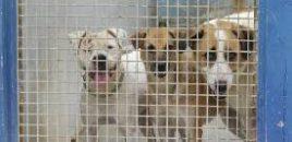 ANDA exige una mejora en el destino de los animales recogidos por la Diputación de Huesca