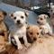 ¡¡BUENAS NOTICIAS!! Una corte de Corea del Sur falla que matar perros por su carne es ilegal.