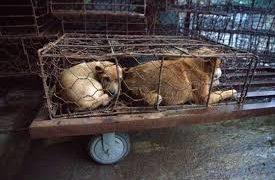 Shenzhen, la primera ciudad china que prohíbe comer perros y gatos