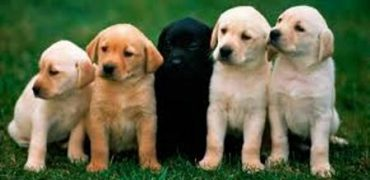 animales de compañía
