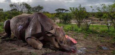 La caza furtiva, el lucro de la extinción.