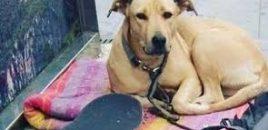 El juez imputa al guardia urbano de Barcelona que mató a la perra Sota de un disparo