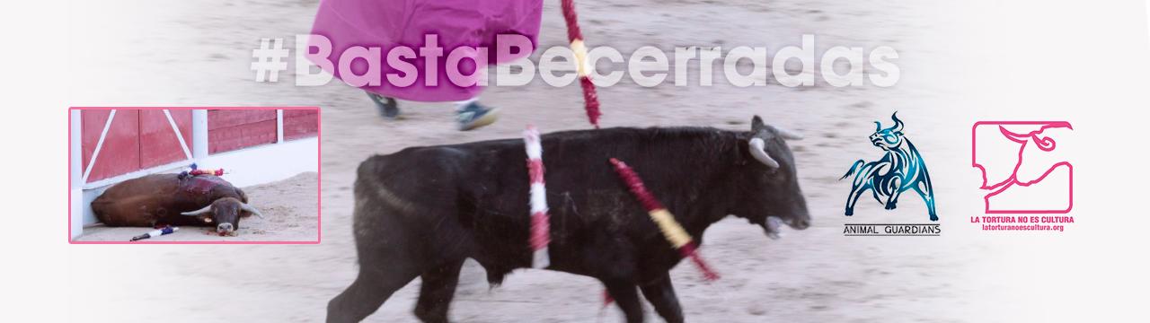 #BastaBecerradas Firma para exigir la prohibición de las becerradas en España