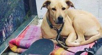 """Barcelona formará a la Guardia Urbana en el """"lenguaje corporal"""" de los animales tras el tiroteo a la perra Sota"""