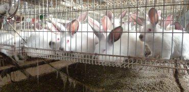 Una nueva investigación revela las condiciones en las que viven los conejos enjaulados