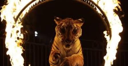 UNA ENCUESTA REVELA QUE LOS EUROPEOS QUIEREN LA PROHIBICIÓN DE LOS ANIMALES SALVAJES EN LOS CIRCOS.