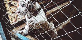 Macrooperación mundial contra el tráfico de especies