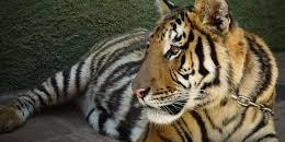 InfoZOOS alerta de las malas prácticas de los zoos en Andalucía