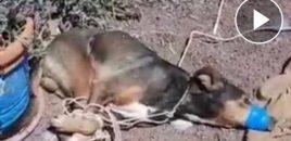 Amordazan a un perro hasta asfixiarlo  en Lanzarote