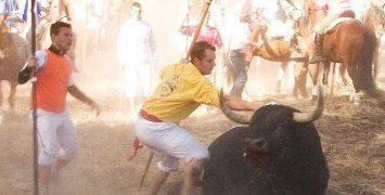 El Tribunal Constitucional avala la prohibición de matar en público al toro de la Vega