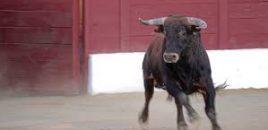 Piedralaves (Ávila) destina la partida de los festejos taurinos a pagar el agua de los vecinos