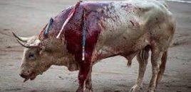 Sin toros en San Mateo (Logroño): la feria taurina queda suspendida