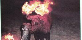 Toros de fuego