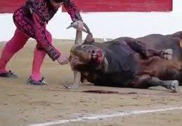 Cultura concede 35.000 euros a la Fundación Toro de Lidia para difundir la tauramoquia en Wikipedia