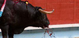 La Junta de Castilla y León «aportará» más de un millón de euros para el toro de lidia