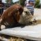 El Puerto de Tarragona registra una de las cargas de animales vivos más grandes de su historia