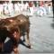 Un nuevo caso de maltrato animal durante un festejo taurino celebrado este verano en Teruel