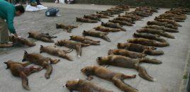La caza del zorro
